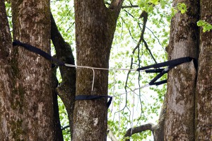 Branches of tree are cabled and braced with flexible strand cables and braces to reduce stress damage from high winds, the weight of ice or snow, and heavy foliage.
